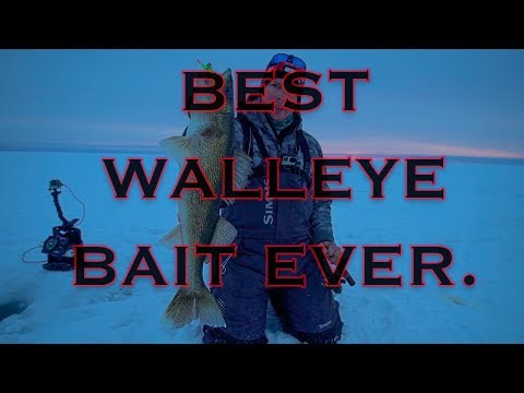 BEST WALLEYE BAIT EVER. (How To Use It) | TIPS & TRICKS |