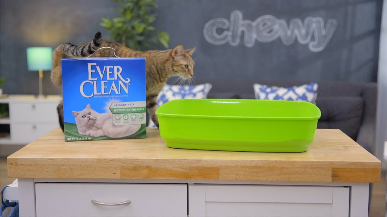 ever clean kitty litter