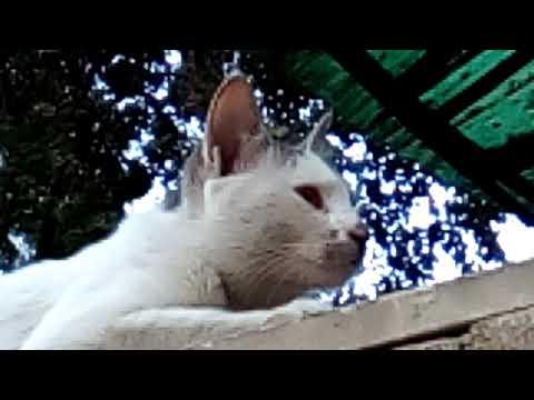 Beautiful cat eyes...
