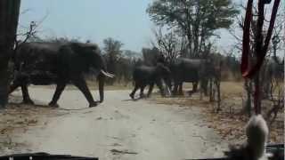 Bostwana - słonie na drodze