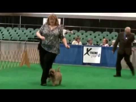 Winnipeg, Ca Northwinds Dog Show Widget Ribbons Both Sat and Sun