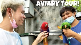DAVEST AVIARY TOUR