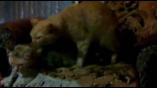 кошка и кот любовь марковь