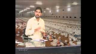 khudkafeel Poultry Part 1