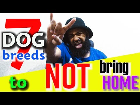 7 Dog Breeds To NOT Bring Home | Bearded Daddy Vlog Life Ep 80