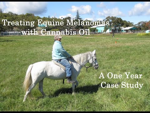 Treating Equine Melanomas with Cannabis Oil - a Case Study