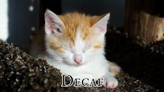 Decaf thumbnail