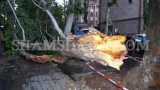 Փաստաբանների պալատի մոտ քամու և փոթորկի հետևանքով հաստաբուն ծառը ընկել է մեքենաների վրա