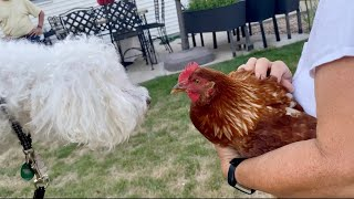 My DOG REACTS to CHICKENS for the First Time!