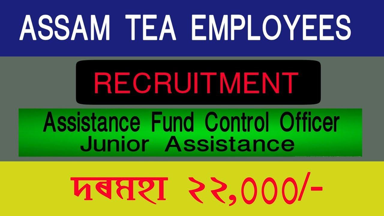 Assam Tea Employees Recruitment 2019 | Assistant Fund Officers & Junior  Assistant