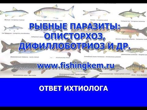 Рыбные паразиты.Описторхоз.Дифиллоботриоз и др.