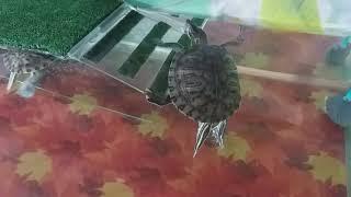 У нас появились красноухие черепахи. Учимся за ними ухаживать. Все не так просто :)