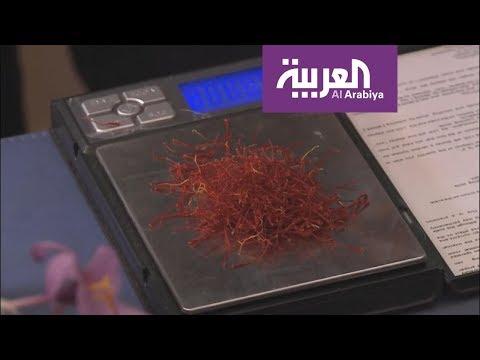 الزعفران يستقطب الشباب المغربي  في قرية تاليوين  - نشر قبل 3 ساعة