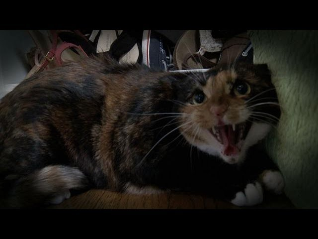 Mia the Cat with PTSD | My Cat From Hell