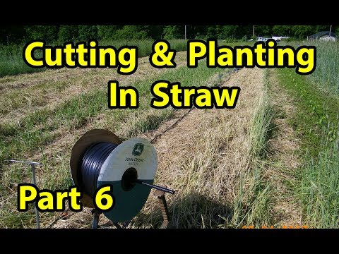True NO TILL Homesteading Organic Vegetable Gardening with mulch for beginners 101.  Pt 6