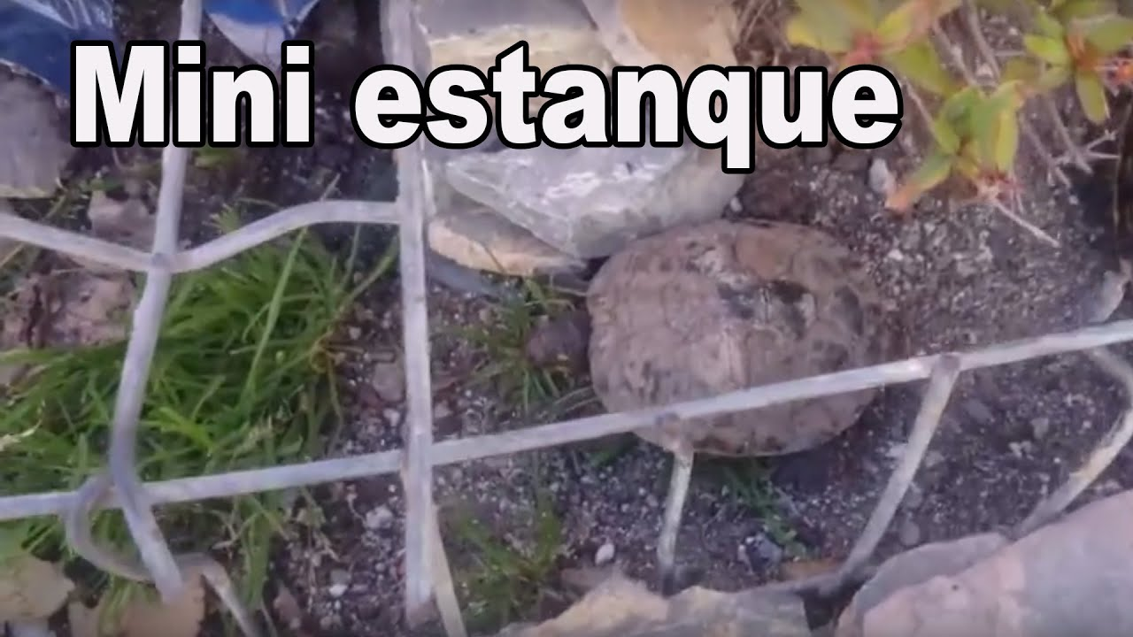 Estanque casero para tortugas mini estanque casero youtube for Videos de estanques