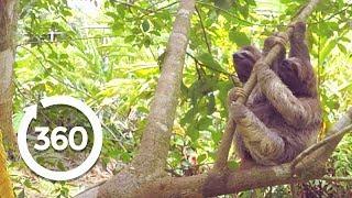 The Legend of Tarzan: Natures Creatures (360 Video)