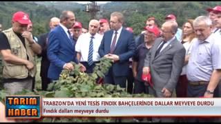Trabzon'da dallar meyveye durdu