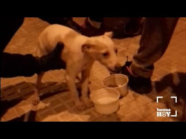 La policía local rescata a un cachorro que llevaba más de un día en un coche