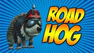 Wizard101: Road Hog Pet Showcase