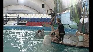 Открытие дельфинария на ВВЦ(, 2011-12-23T18:50:46.000Z)