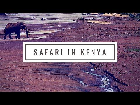 A Wildlife Safari in Kenya