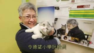 德望學校貓老師