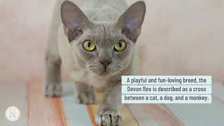 Top 10 Popular Cat Breeds in the US | Mittens and Max