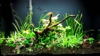 17. Update Of The 29 Gal Cardinal Tetra Planted Aquarium, Free Plants