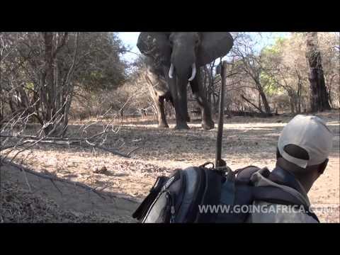 Mana Pools wandelsafari of walking safari in Zimbabwe