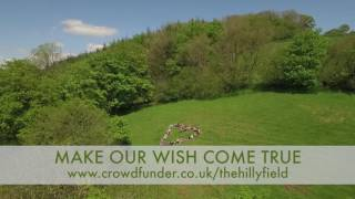 Balloon - Make a wish for The Hillyfield.