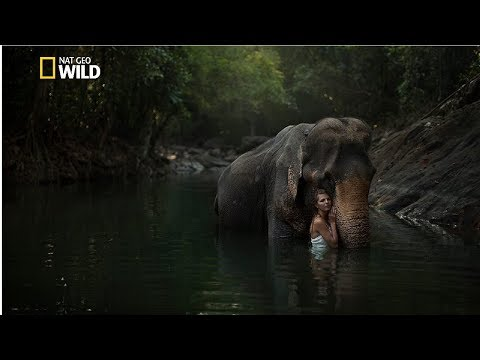 Creatures Of The Amazon Rainforest - National Geographic Documentary