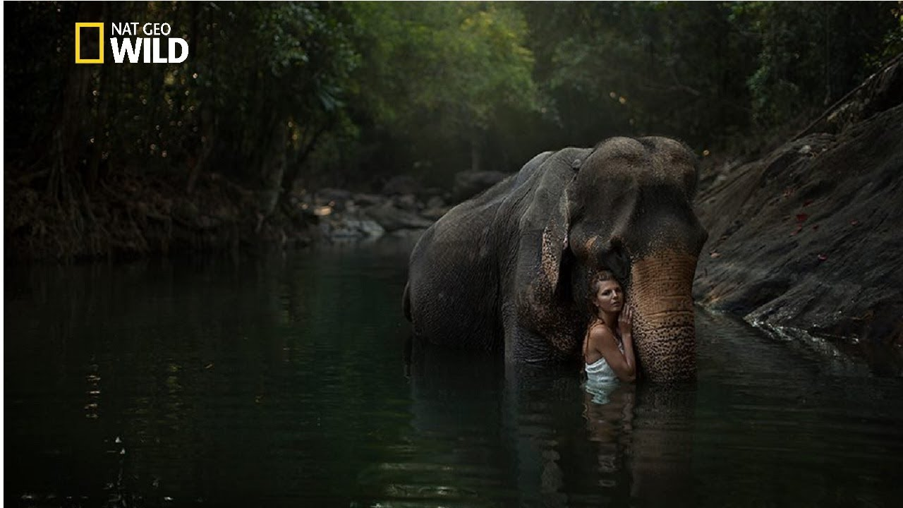 Download Creatures of the Amazon Rainforest - National geographic Documentary