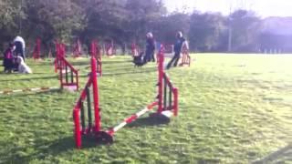 Bells Cavalier King Charles Spaniel Dog Agility Jumps Kof
