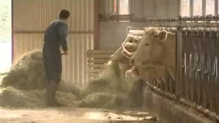 Saône-et-Loire : les éleveurs bovins manifestent