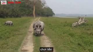 Hài Hước  Động vật   Khi Động Vật Biết Troll  Động Vật Troll   Con Người  Funny Animals