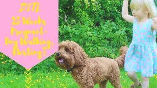 DITL - 28 Weeks Pregnant, Dog Walks & Nesting?