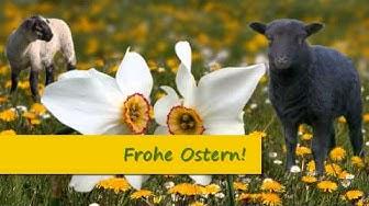 Frohe Ostern! Ostergrüße für Kinder + Familie mit Flötenmusik, Osterglocken, Osterlamm