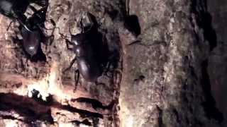 山にクワガタ虫とカブトムシを観察にいきました。もし、お子さんがいる...