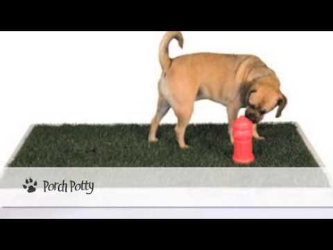 Best Indoor Dog Potty Choices - YouTube