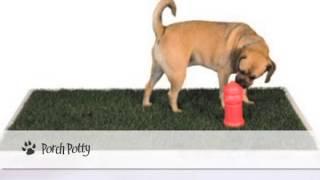 Best Indoor Dog Potty Choices
