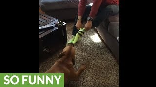 Man wears tennis ball colored socks in front of dog, inevitability follows