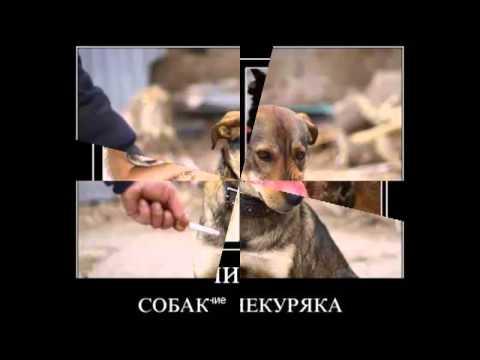 Демотиваторы про Собак №1