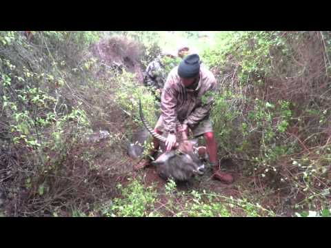 Hunting Waterbuck and Steinbuck in Africa