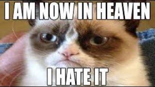 Grumpy cat memes | RIP Grumpy :(