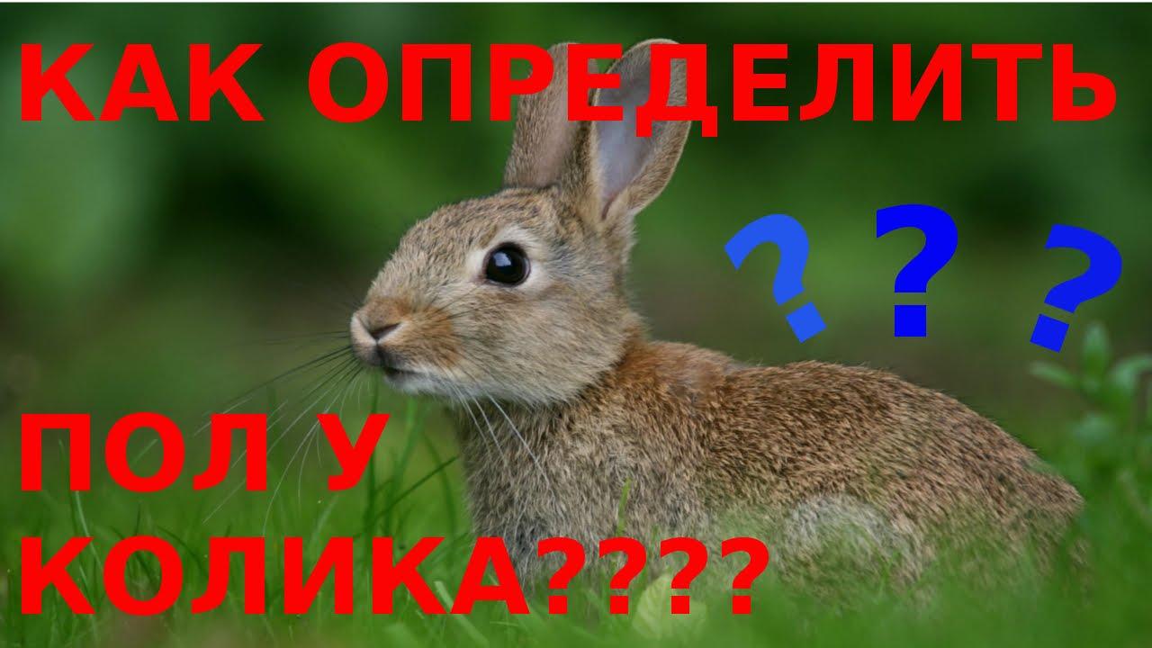 onlayn-dikie-samochki-zhenskiy-anus-krupnim-planom-foto-v-kontakte