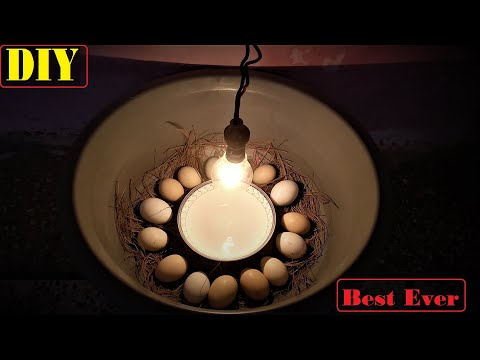 HOW TO HATCH EGGS AT HOME SIMPLE AND EASY  WITHOUT ANY THERMOSTAT || Hatching Without Incubator