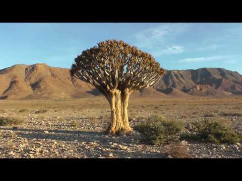 Namibia - Ein Reisebericht über die Highlights