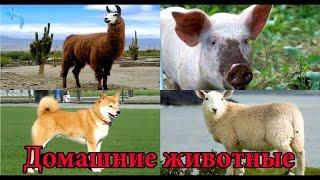 Домашние животные. Изучаем домашних животных. Звуки животных развивающий мультик