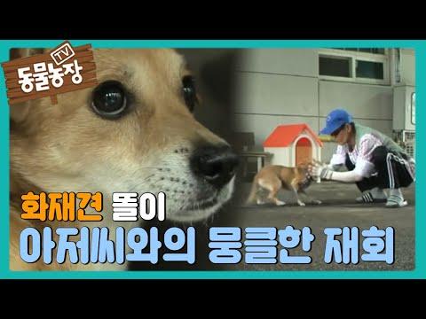 화재 견 똘이, 아저씨와의 '뭉클한 재회' @TV 동물농장 20150830